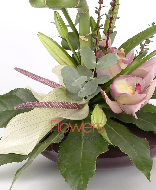 vas, 1 bambus, 3 anturium alb, 1 cymbidium roz, 1 crin alb, eucalypt, aralia