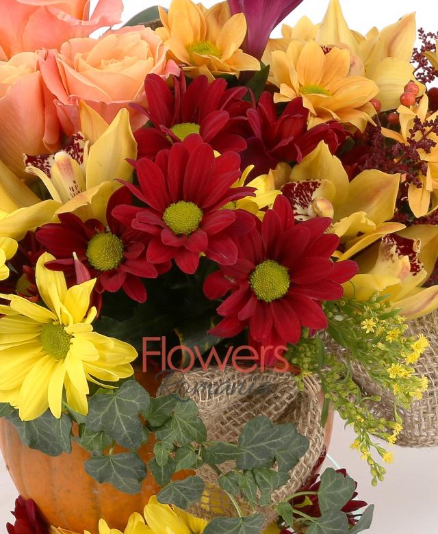 3 trandafiri peach, 3 crizanteme grena, 3 crizanteme portocalii, 1 crizanteme galbenă, 5 cupe cymbidium galben, 2 alstroemeria grena, 3 astilbe roșu, 2 solidago, iedera, eucalypt, 2 frunze croton, 1 filodendron, 1 dovleac