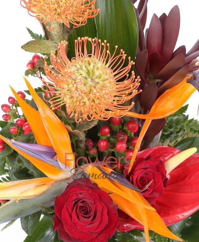 cub, 3 strelitzia, 3 leucadendron, 2 leucospermum, 1 anturium rosu, 2 trandafiri rosii, 3 hypericum, aspidistra