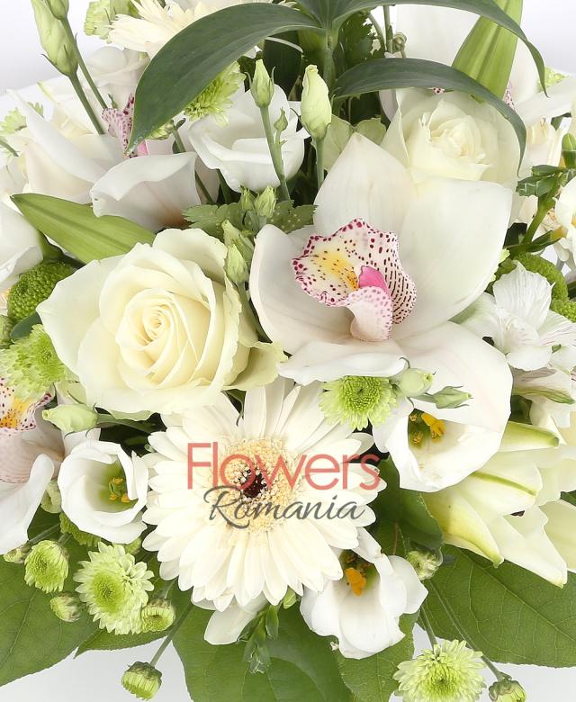 cub, 5 trandafiri albi, 5 gerbera alba, 1 cymbidium alb, 2 crini albi, 5 lisiantus alb, 3 santini verde, 3 alstroemeria alba, 2 santini alb, salal