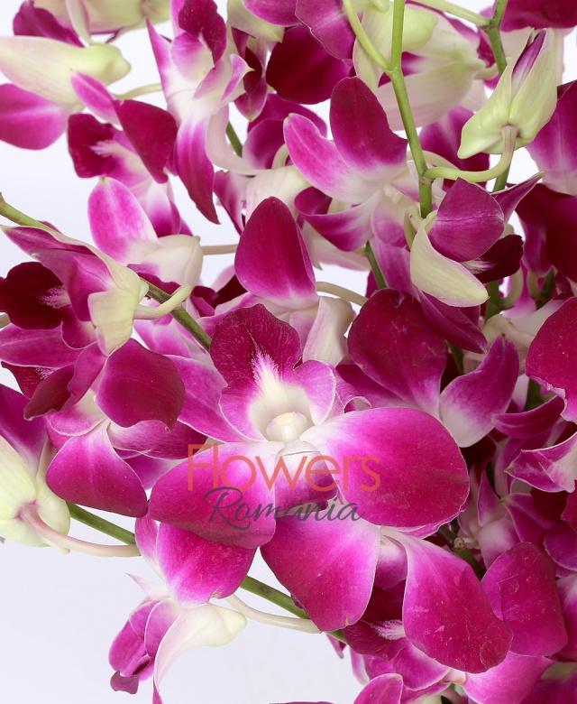 49 orhidee albe