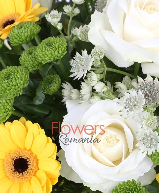 5 trandafiri albi, 7 gerbera galbenă, 6 santini, astranția