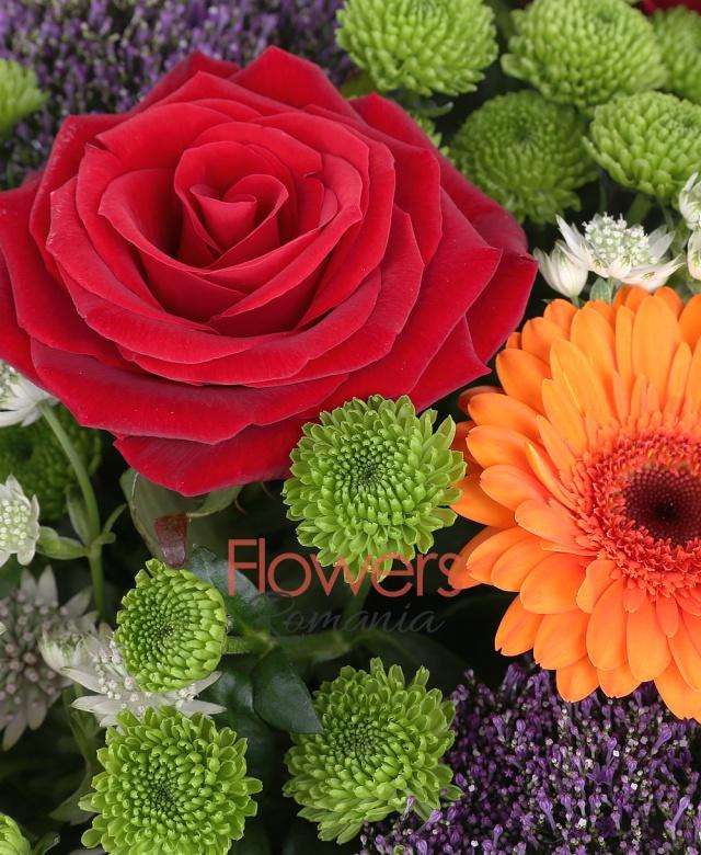 5 trandafiri rosii, 3 gerbera portocalie, 4 trachelium mov, 5 santini, astranția, 5 eryngium, eucalypt