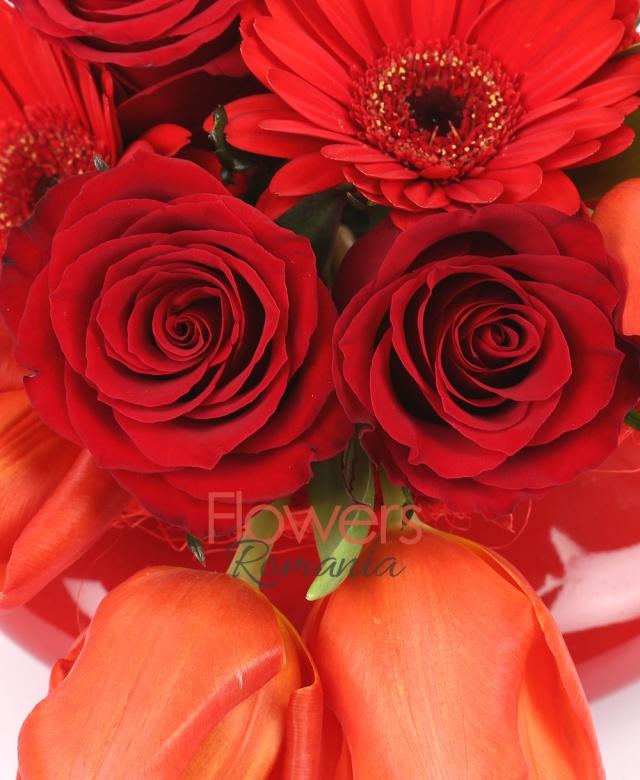 5 lalele rosii, 3 gerbera rosii, 3 trandafiri rosii, tipirig, muschi