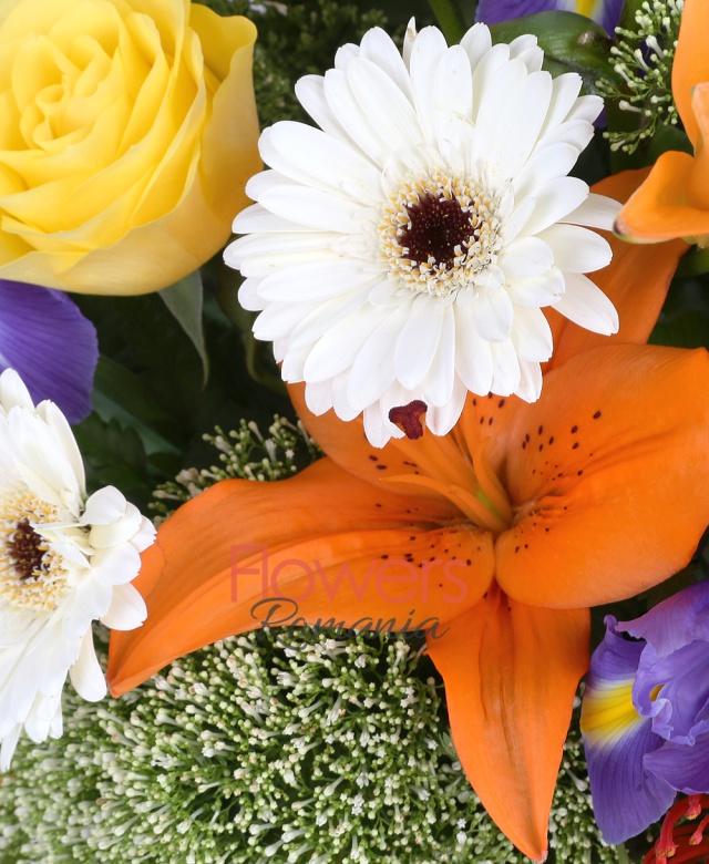2 crini portocalii, 7 trandafiri galbeni, 5 iris mov, 4 gerbera alba, 3 leucospermum, 3 trachelium alb, salal