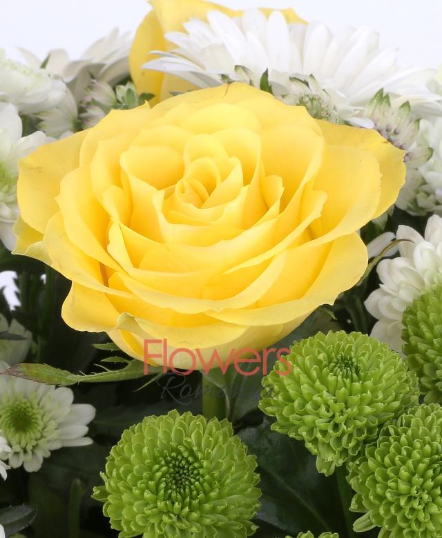 7 trandafiri galbeni, 5 gerbera albă, 4 crizanteme albe, 4 santini verde, 4 trachelium alb, astranția