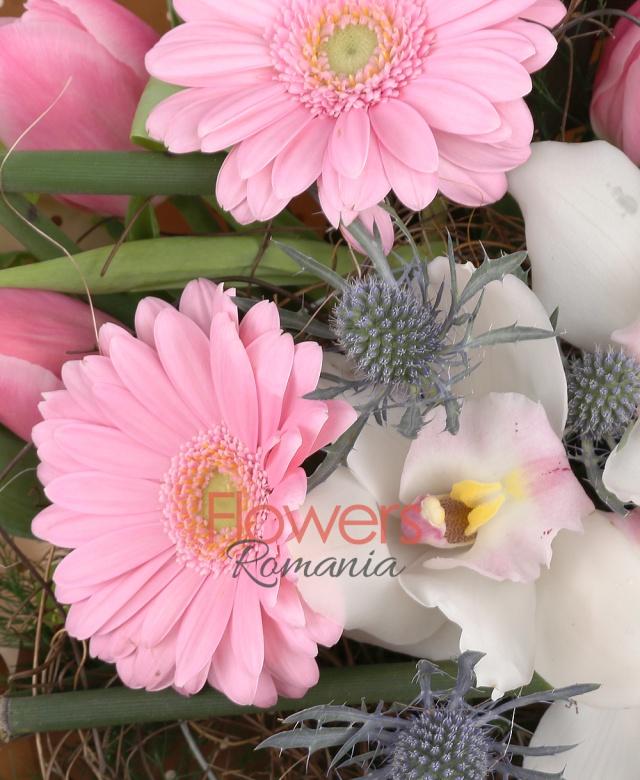 2 gerbera roz, 2 leucadendron, 7 lalele roz, 2 eryngium, cymbidium alb, verdeață