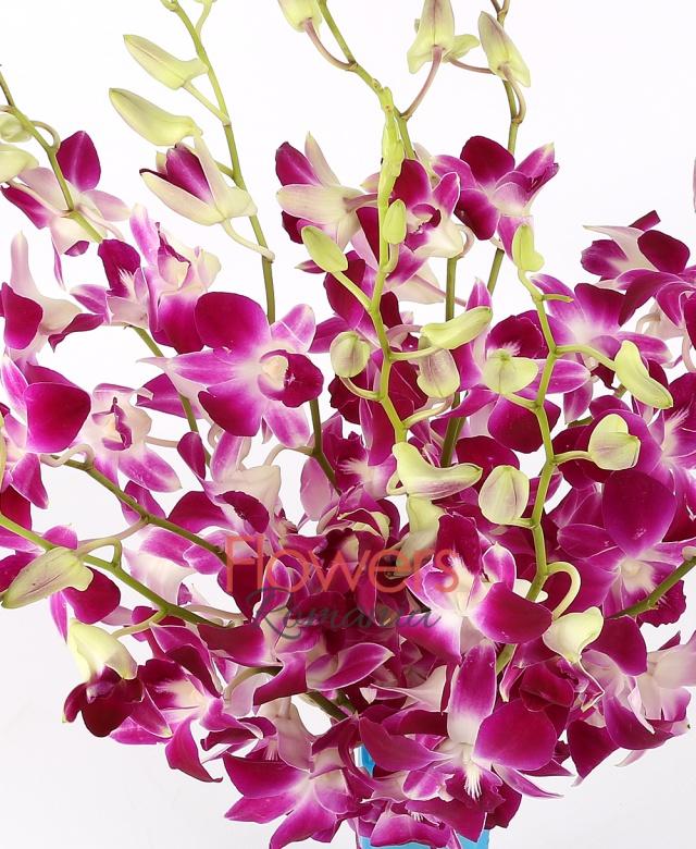 9 dendrobium orchids