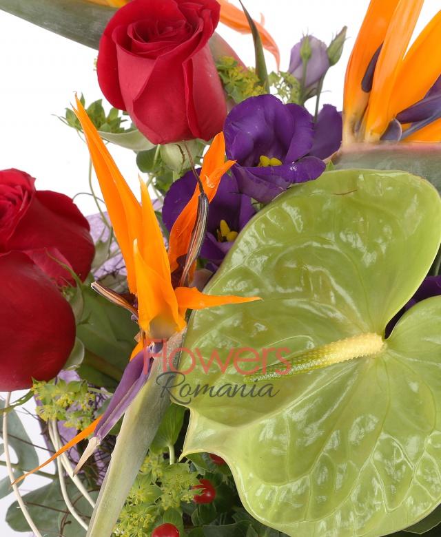 3 strelitzia, 3 trandafiri rosii, 2 anthurium verde, 3 hypericum roșu, 2 lisianthus mov, eucalypt, bupleurum, curly, cuib