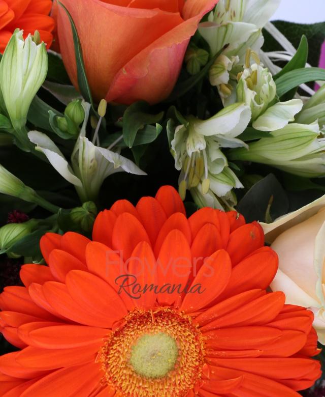 4 trandafiri crem, 3 trandafiri portocalii, 2 gerbera portocalie, 3 alstroemeria alba, 2 leucadendron roșu, 3 astilbe rosii, 1 gypsophilla alba, 2 eucalypt, 5 salal, cuib