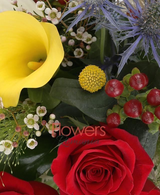 3 trandafiri rosii, 3 anthurium alb, 2 calle galbene, 3 hypericum roșu, 1 eryngium, 3 craspedia, 2 waxflower, 2 panicum, 5 salal, 1 monstera, cuib