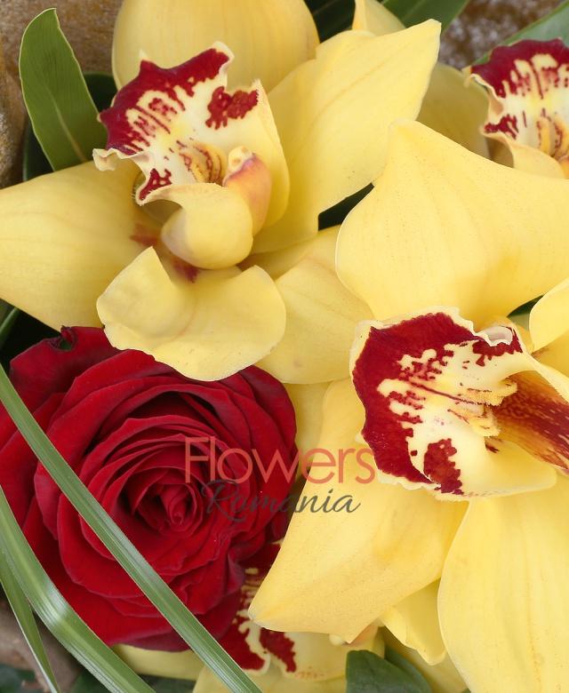1 cymbidium galben, 3 trandafiri rosii, 3 hypericum rosii, corylus, filodendron, aspidistra