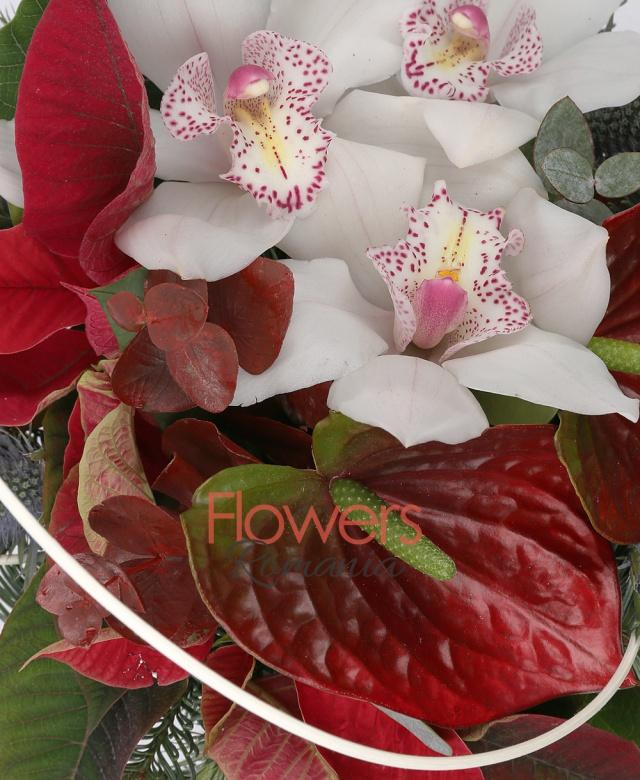 1 cymbidium alb, 2 anthurium rosii, poinsettia, eryngium, curly, eucalypt, brad, vas ceramic