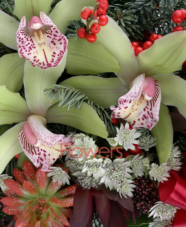 3 cupe orhidee verde, 1 ilex, 2 echeveria rosii, 2 leucadendron rosu, 2 schimia, astrantia alba, brad, eucalypt, vas ceramic