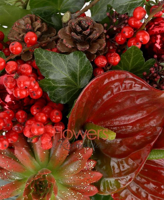 2 ilex, 1 echeveria, 2 anthurium rosii, 1 schimia, conuri, globuri, vas ceramic