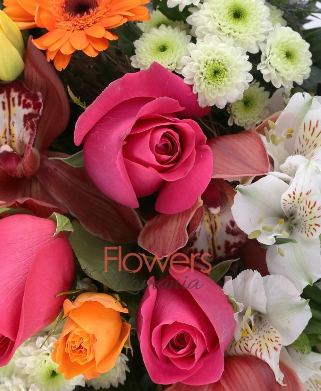 4 trandafiri ciclam, 3 santini alb, 3 gerbera portocalie, 10 frezii albe, 2 alstroemeria albe, 1 eryngium, 4 miniroze portocalii, 1 cymbidium grena, 1 trandafir portocaliu, 2 lalele galbene, aspidistra, pin