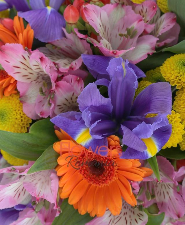 5 gerbera portocalii, 5 alstroemeria roz, 4 santini galben, 5 iris mov, 5 frezii albe, hypericum, salal, ferigă