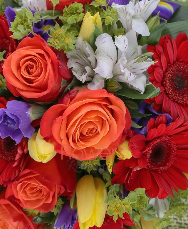 5 gerbera rosii, 5 trandafiri portocalii, 10 lalele galbene, 6 iris mov, 3 alstroemeria albe, bupleurum, salal