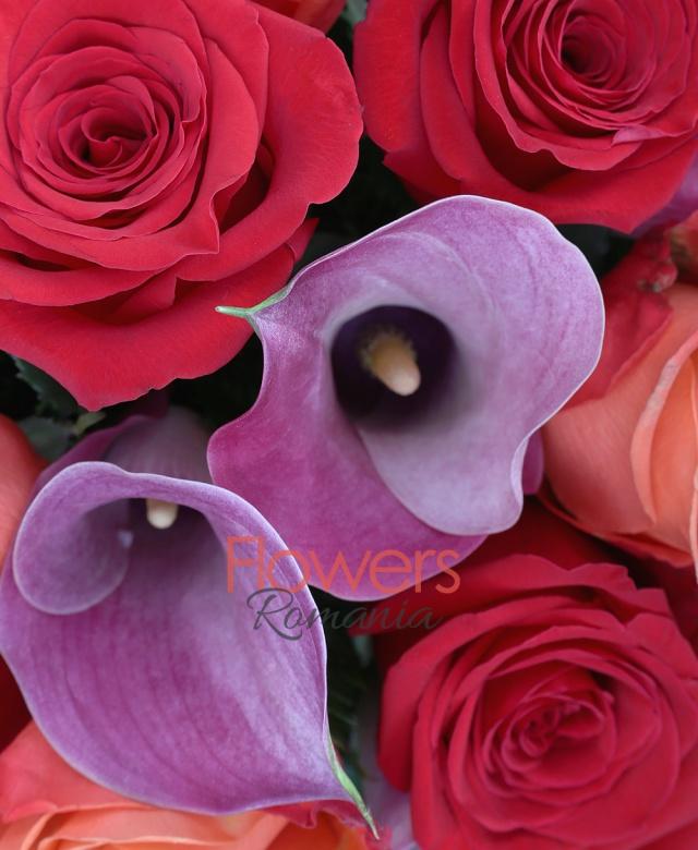 6 trandafiri portocalii, 5 trandafiri rosii, 8 cale mov, salal