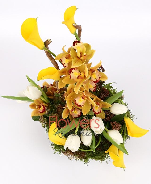 1 yellow cymbidium, 7  white tulips, 7 yellow cala, corylus, moss, greenery