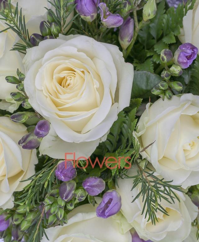 11 trandafiri albi, 20 frezii mov, 2 waxflower, salal, ferigă