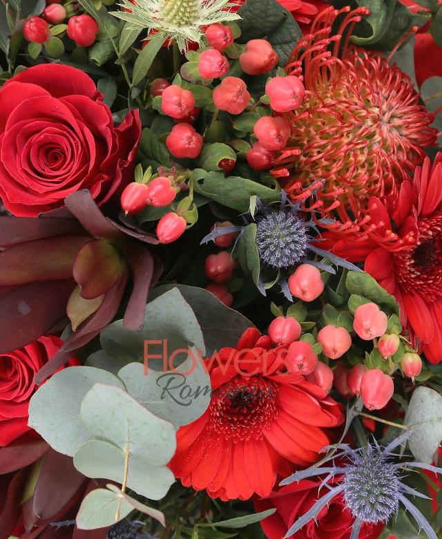 7 trandafiri rosii, 7 gerbera rosii, 3 leucadendron, 5 hypericum roșu, 3 leucospermum, 1 proteea, 4 eryngium, eucalypt, salal
