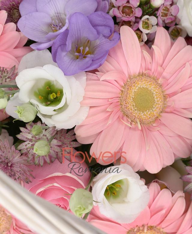 6 gerbera roz, 5 santini roz, 5 trandafiri roz, 4 lisianthus alb, astranția grena, 5 frezii mov, cymbidium grena, cymbidium alb, waxflower, salal, coș