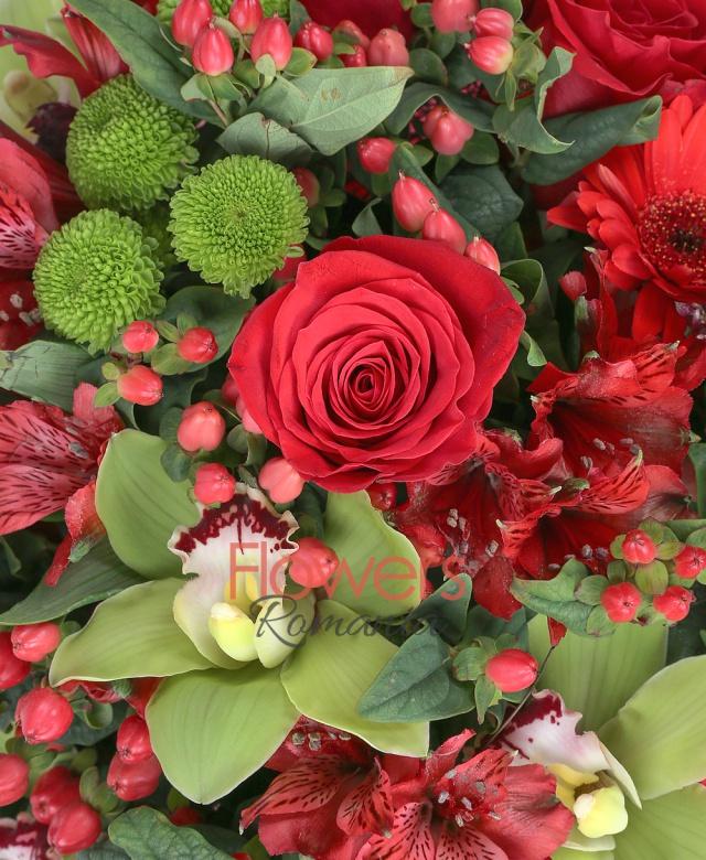 9 trandafiri rosii, 7 gerbera rosii, 3 santini verde, 5 hypericum roșu, 5 astranția roșie, cymbidium verde, cuib