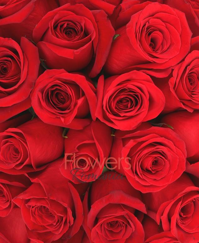 43 trandafiri rosii, cutie