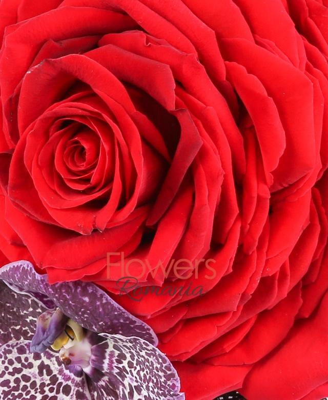trandafir roșu construit, orhidee vanda, hypericum, perle, cuib