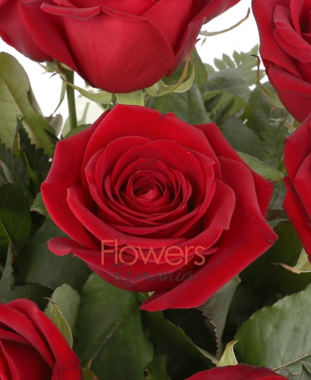 11 trandafiri rosii, ferigă