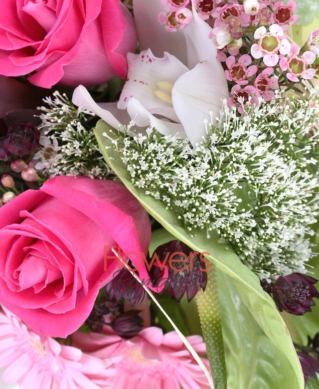 7 trandafiri cyclam, 3 gerbera roz, 2 leucadendron, 3 anthurium verde, 3 trachelium alb, cymbidium alb, astranția grena, waxflower roz, eucalypt, cuib