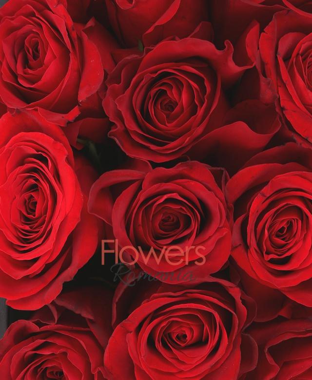 19 trandafiri rosii, cutie