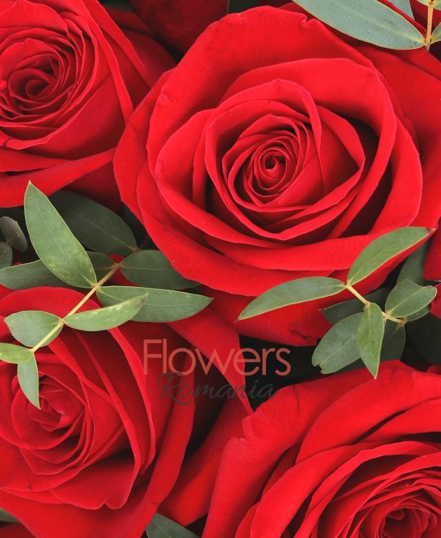 29 trandafiri rosii, eucalypt, cutie