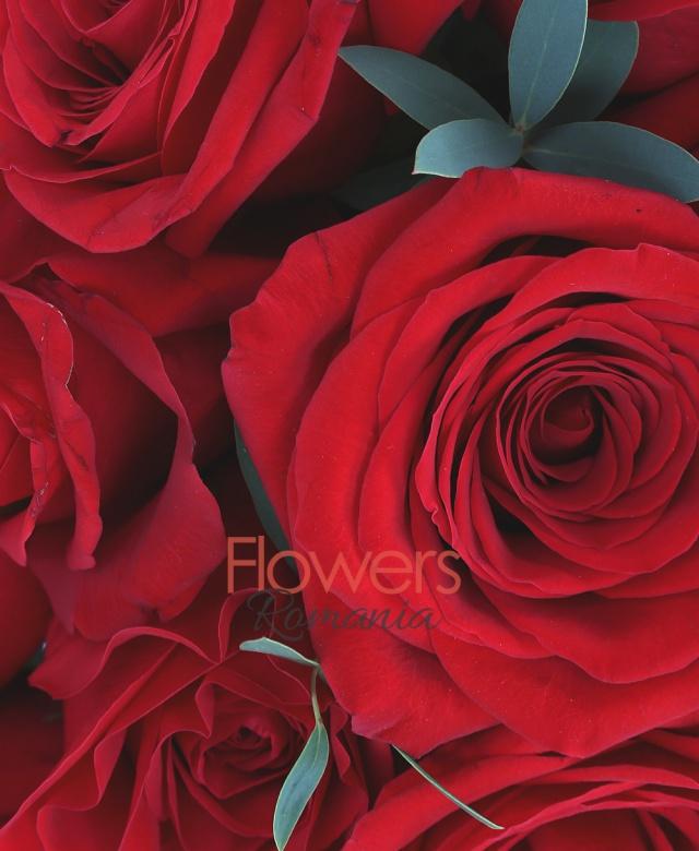 35 trandafiri rosii, eucalypt, cutie