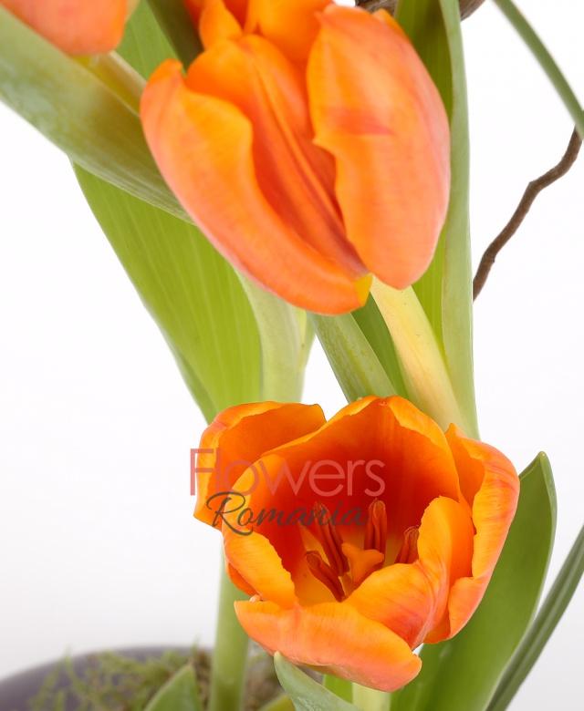 7 lalele portocalii, 1 suculentă, corylus, beargrass