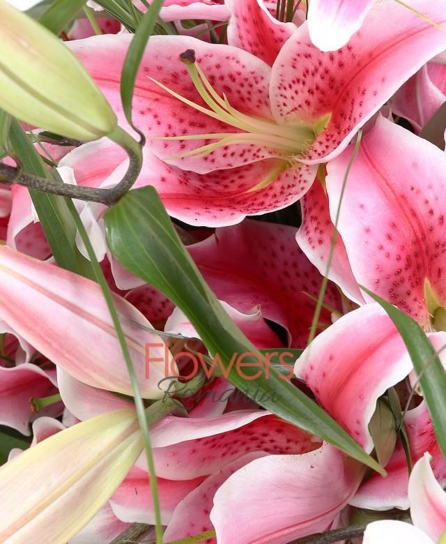 7 crini imperiali roz, beargrass, ferigă