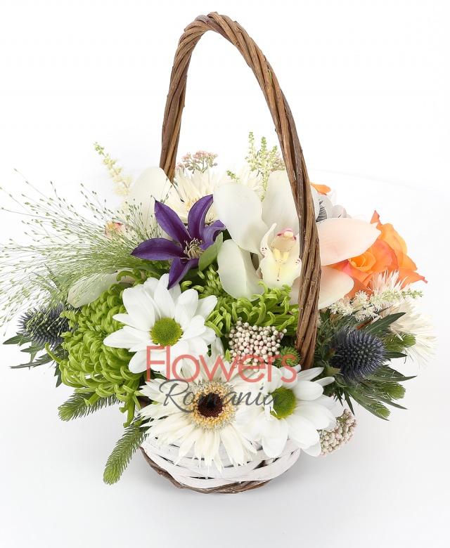 3 orange roses, 2 gerbera, 2 green chrysanthemums, 1 eryngium, 1 clematis, 2 brunia, 2 rice flower, 3 astilbe, white cymbidium, basket