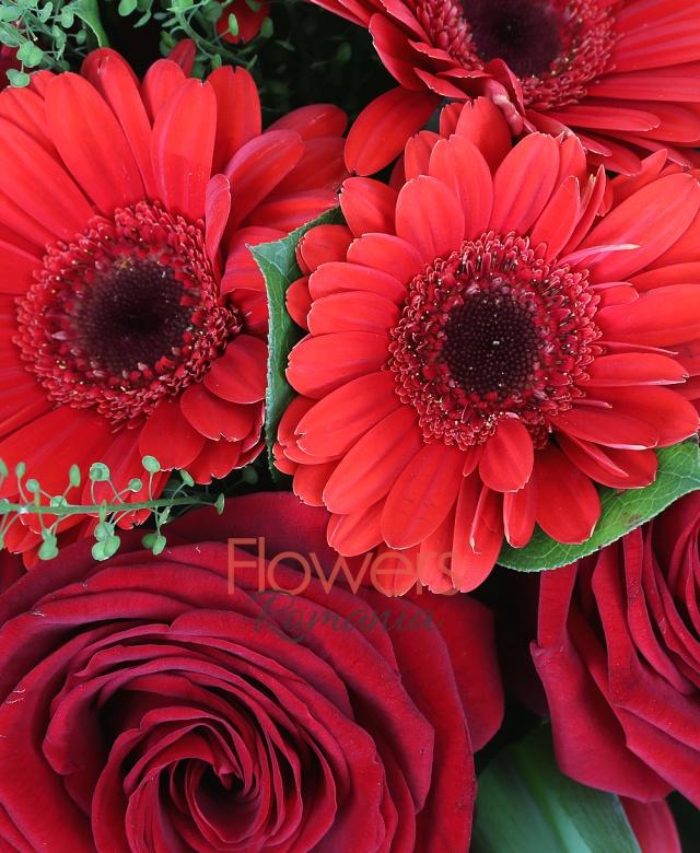 10 lalele rosii, 10 trandafiri rosii, 7 gerbera rosii, 5 aspidistra, 3 thsalpi
