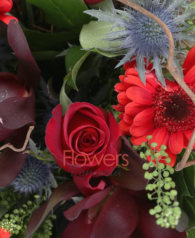 6 gerbera rosii, 4 leucadendron, 7 trandafiri rosii, 5 eryngium, salal, thsalpi