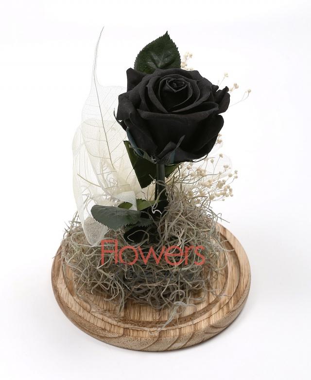 1 Cryogenic black rose, glass dome