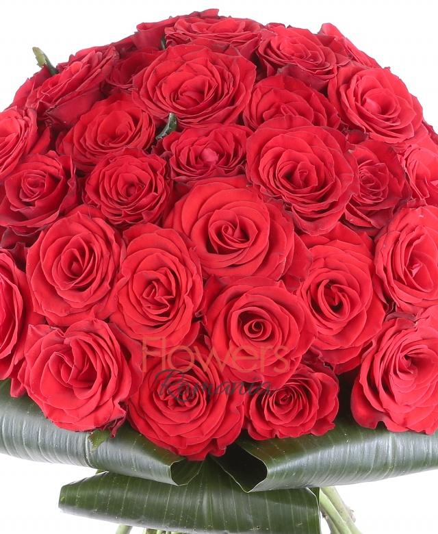 39 trandafiri rosii, aspidistra