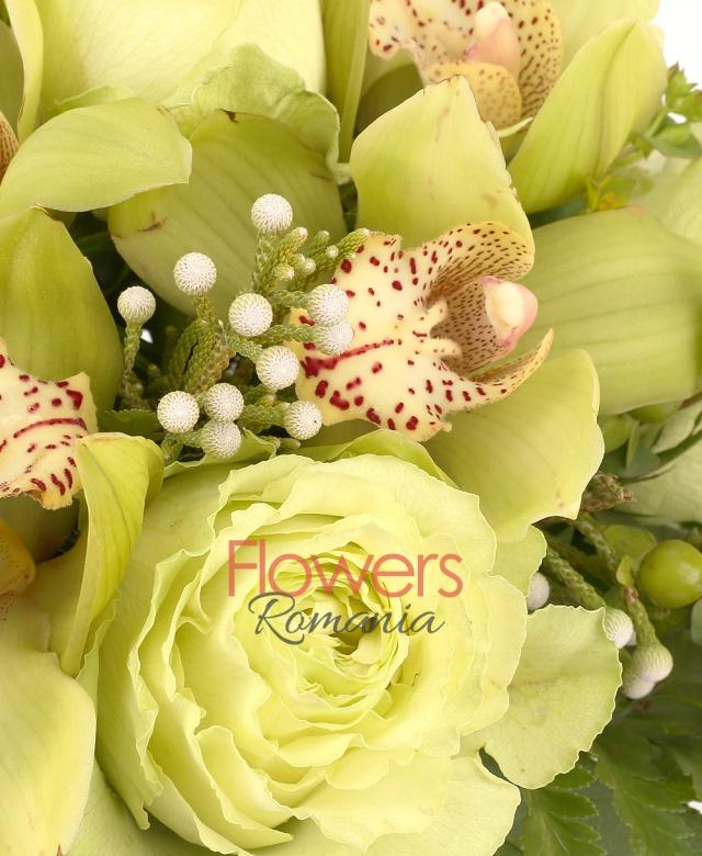 5 trandafiri verzui, 1 cymbidium verde, bupleurum, brunia, 5 hypericum verde, salal, beargrass