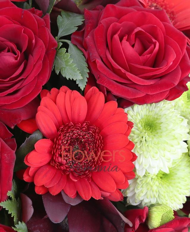7 trandafiri rosii, 5 santini albi, 5 leucadendron, 4 gerbera rosii, salal