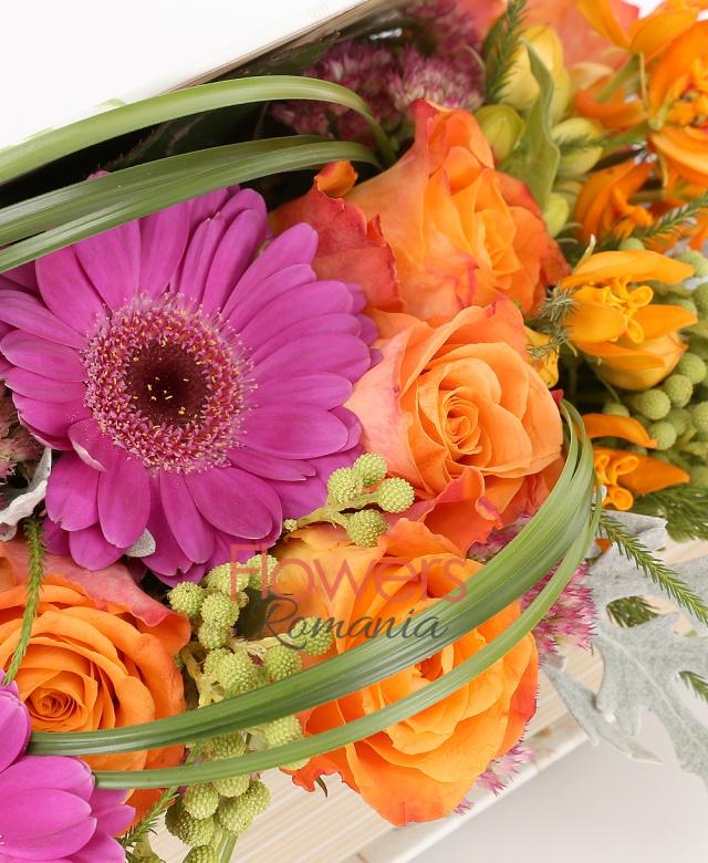 carte, 6 trandafiri portocalii, 3 gerbera ciclam, brunia, bupleurum, kalanchoe, asclepias portocalii, beargrass