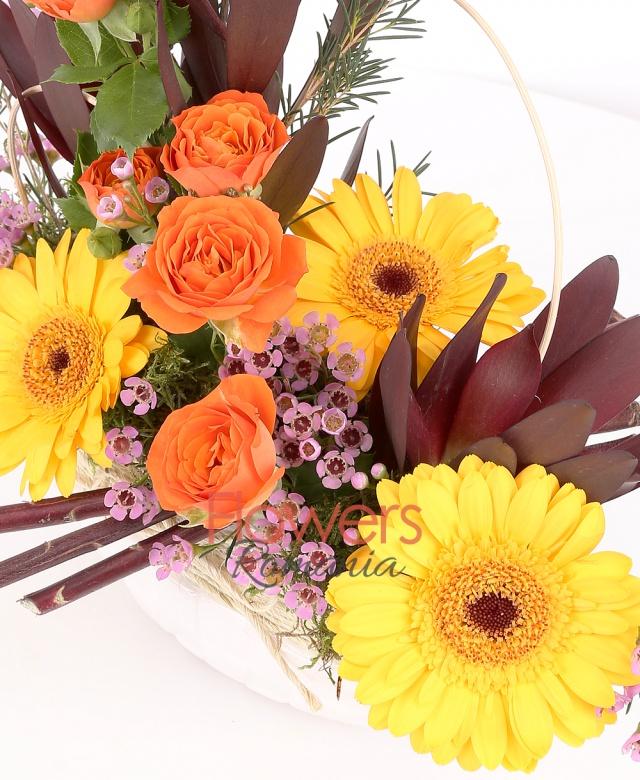 vas ceramic, 3 gerbera galbenă, 3 leucadendron, 1 miniroza portocalie, waxflower, mușchi