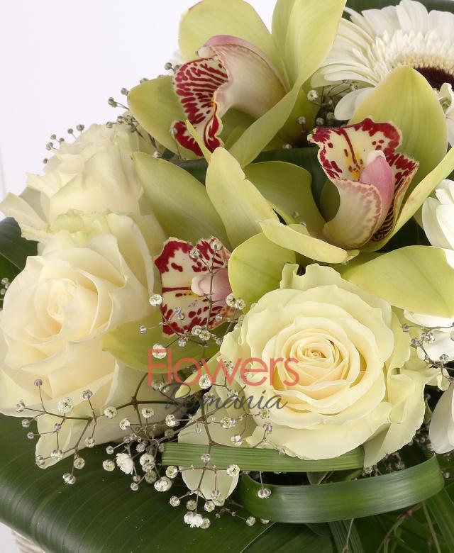 3 trandafiri albi, 3 gerbera alba, 1 cymbidium verde, gypsophila, aspidistra
