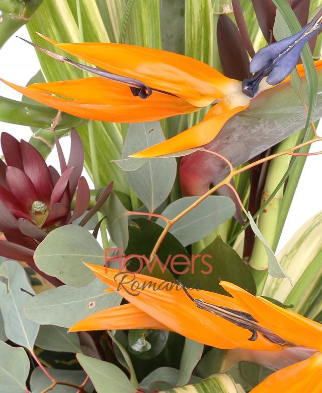 3 strelitzia, 3 leucadendron, 2 bambus, eucalypt, aspidistra, monstera, croton