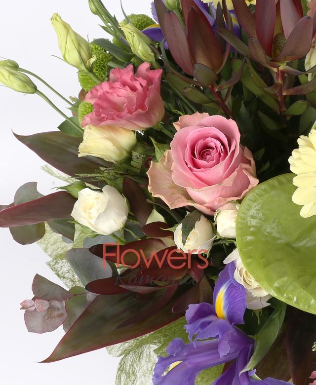 3 anthurium verde, 5 iris mov, 3 trandafiri roz, 3 lisianthus roz, 5 lisianthus alb, 3 fire leucadendron, 3 fire santini verde, 3 fire miniroza alba, 3 fire gerbera crem, eucalypt, 3 fire trachelium alb
